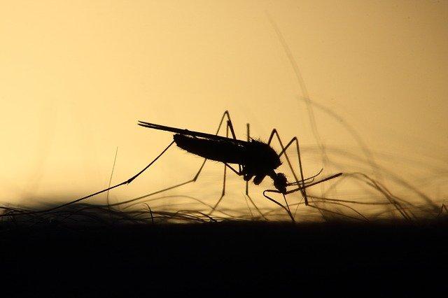 traitement anti moustique professionnel