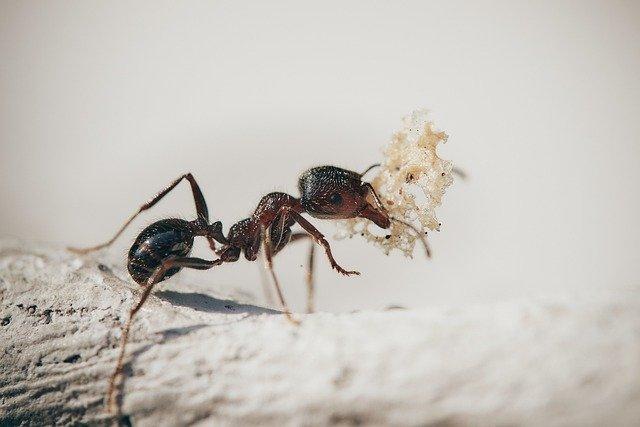 Désinsectisation fourmis Toulon